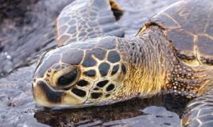 Hawaii: Liebe, Lachen, Lilikoi